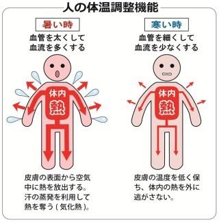 機能 体温 調節